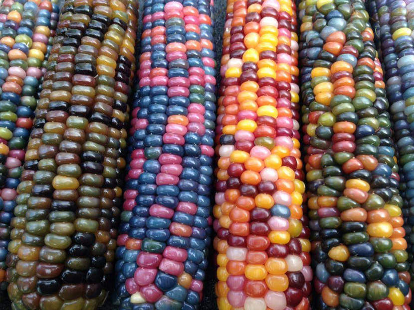 rainbow-food-corn